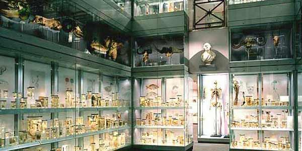 Oday-hunterian-london